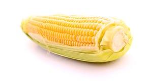Corn isolated on white Royalty Free Stock Photo