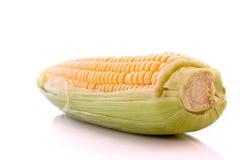Corn isolated on white Stock Photo