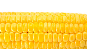 Corn isolated on white Stock Photography