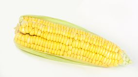 Corn isolated on white. Background Royalty Free Stock Photos