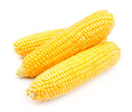 Corn isolated Royalty Free Stock Images