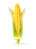 Corn isolated royalty free stock image