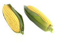 Corn isolated Stock Photography