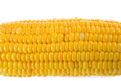 Corn. Isolated on a white background royalty free stock images