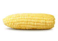 Corn isolated on a white background Royalty Free Stock Photo