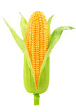 Corn isolated Royalty Free Stock Photos