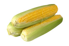 Corn  isolated on a white background Stock Photography