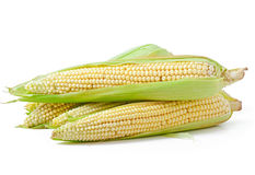 Corn isolated on a white background Royalty Free Stock Photography