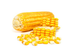 Corn isolated on white background Royalty Free Stock Image