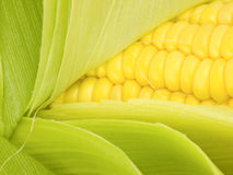 Corn Kernals Close up Stock Photo