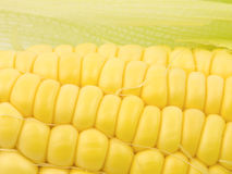 Corn Kernals Close up Stock Image