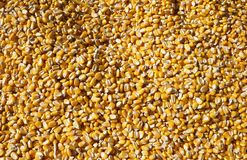 Corn Kernels. Golden Yellow Corn Kernel Background Stock Photo