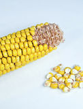 Corn Kernels. Close-up of yellow corn kernels, healthy nutritious food Royalty Free Stock Image