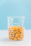 Corn kernels in a beaker on blue Stock Photography