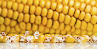 Corn Kernels, Corn Cob Background. Close-up of yellow corn kernels with reflection, corn cob in the background Royalty Free Stock Photo