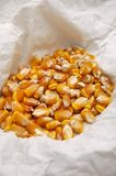 Corn kernels dried for popcorn Stock Photo