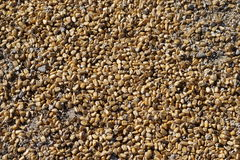 Corn kernels on the ground Royalty Free Stock Photo