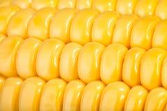 Corn kernels macro Royalty Free Stock Photo