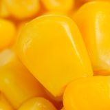 Corn Kernels Macro Stock Images