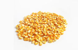 Corn kernels Stock Images