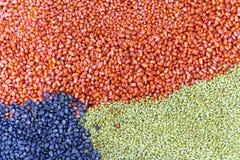 Corn kernels Stock Photography
