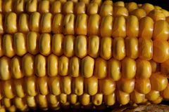 Corn Kernels, Sweet Corn, Corn On The Cob, Vegetarian Food stock photos