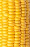 Corn kernels. Texture detail of corn kernels Royalty Free Stock Image
