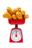 Corn and kitchen scales on a white background Stock Photography