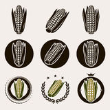 Corn label and icons set. Vector. Illustration Royalty Free Stock Images
