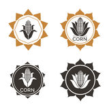 Corn label. Corn vegetable icon. Vector emblem of farm corncob or corn ear with leaves. Vegetarian cuisine vegetable and agriculture ripe harvest. Sweet corn cob Stock Images