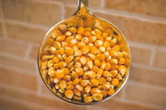 Corn in a laddle Royalty Free Stock Photography