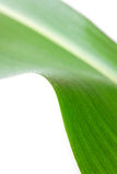 Corn Leaf ,isolated On White Royalty Free Stock Photos