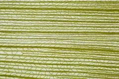 Corn leaf macro Royalty Free Stock Images