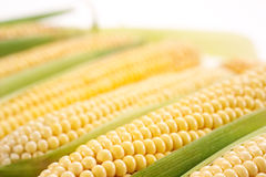 Corn with leaves Stock Photos