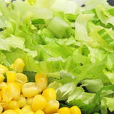 Corn and lettuce Stock Images