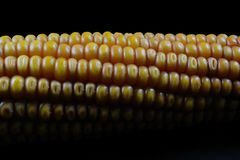 Corn lines. Corn, colors, lines and structures Royalty Free Stock Photography