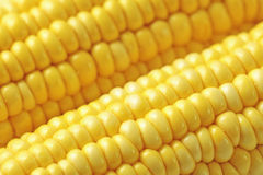 Corn macro Royalty Free Stock Photos