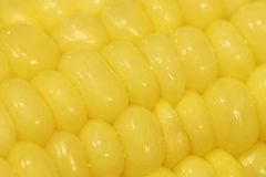 Corn Macro Stock Photography