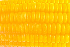 Corn  macro closeup Stock Image