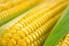 Corn macro Stock Image