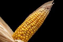 Corn, macro, yellow, ripe, appetizing, food, healt Stock Photo