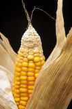 Corn, macro, yellow, ripe, appetizing, food, healt Royalty Free Stock Photography