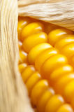 Corn, macro, yellow, ripe, appetizing, food, healt Stock Photography