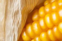 Corn, macro, yellow, ripe, appetizing, food, healt Stock Photography