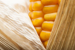 Corn, macro, yellow, ripe, appetizing, food, healt. Macro of ear of corn for textured background Royalty Free Stock Photography