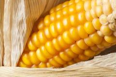 Corn, macro, yellow, ripe, appetizing, food, healt. Macro of ear of corn for textured background Stock Photography