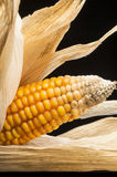 Corn, macro, yellow, ripe, appetizing, food, healt Royalty Free Stock Photos