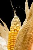 Corn, macro, yellow, ripe, appetizing, food, healt Stock Image