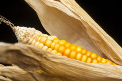 Corn, macro, yellow, ripe, appetizing, food, healthy eating Stock Photography