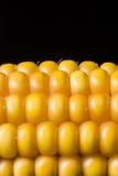 Corn, macro, yellow, ripe, appetizing, food, healthy eating. Macro of ear of corn on black background Royalty Free Stock Image